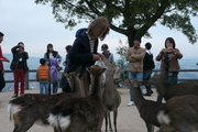 古都奈良の冬の風物詩 『 鹿寄せ 』